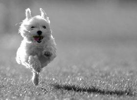 Seu animalzinho fugiu?